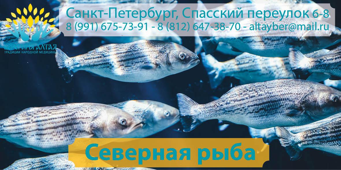 Северная рыба, рыба Алтая – купить в СПб в магазине «Берегиня Алтая»